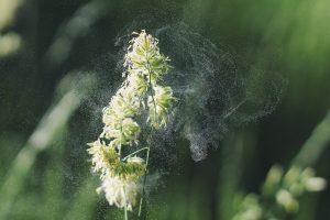 pollen-allergi-lifewave